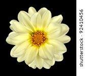 White Dahlia Flower With Yello...