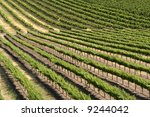 a vineyard  with its rows of... | Shutterstock . vector #9244042