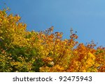 Yellow And Red Foliage On Blue...