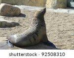 seal | Shutterstock . vector #92508310