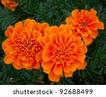 Marigold Flowers  Natural...