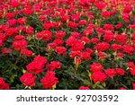 Stock photo a rose garden 92703592