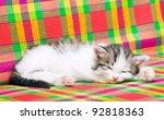 Stock photo kitten 92818363