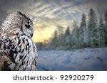Owl Portrait On Winter Forest...
