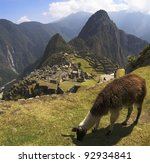 A Lama grazing in a terrace with Machu Picchu and surrounding mountains in the background. - stock photo