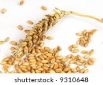 wheat ear with pile of grain... | Shutterstock . vector #9310648