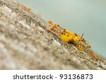 ants eat orange beetle in green nature or the garden - stock photo