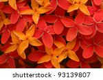 Ashoka flowers, Popular flowers grows in Southern India - stock photo