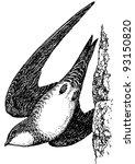 bird alpine swift | Shutterstock .eps vector #93150820