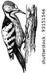 bird white backed woodpecker | Shutterstock .eps vector #93151546