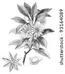 japanese star anise  illicium... | Shutterstock .eps vector #93164089