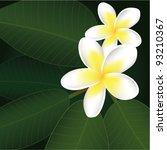 vector frangipani flowers | Shutterstock .eps vector #93210367