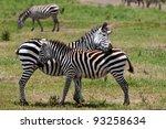 zebras in the ngorongoro crater ... | Shutterstock . vector #93258634