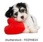 Stock photo a cute lover valentine havanese puppy dog with a red heart isolated on white background 93294814