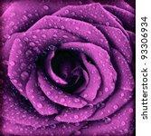 Purple Dark Rose Background ...