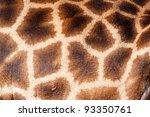 Photo Showing A Giraffe Skin...