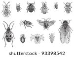 set of bugs  cicada and louses  ... | Shutterstock .eps vector #93398542
