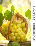 bunch of grapes with vine... | Shutterstock . vector #93437449