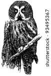 bird great grey owl | Shutterstock .eps vector #93495367