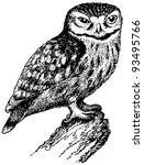 bird little owl | Shutterstock .eps vector #93495766