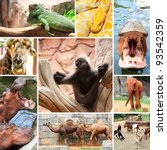 collage photo of some wild... | Shutterstock . vector #93542359