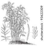 spanish cane  arundo donax   ...   Shutterstock .eps vector #93622309
