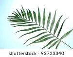 Beautiful Palm Leaf On Blue...