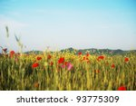 Wheat field in summer time, with uncultivated red poppies, yellow canola and purple flowers. - stock photo