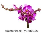 pink orchid isolated on a white ... | Shutterstock . vector #93782065