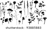 Illustration With Wild Flowers...