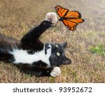 Stock photo black and white tuxedo cat playing with an orange butterfly in flight 93952672