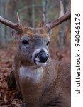Whitetail Buck Deer Extreme...