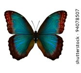 Stock photo blue morpho 94078507
