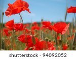 A meadow of beautiful red poppies in summer time. - stock photo