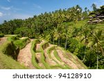 Ubud Rice Terraces, in Bali - stock photo