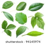 Collection Of Garden Leaves On...
