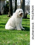 Golden Doodle Dog Outdoors Lon...