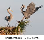 Great Blue Herons At The Ritch...