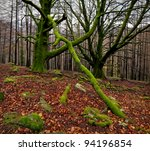 Colours of autum in the green forest - stock photo