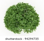 top view of erythrina trees... | Shutterstock . vector #94294735
