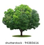 tree isolated on white - stock photo
