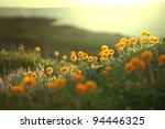 sunny meadow | Shutterstock . vector #94446325
