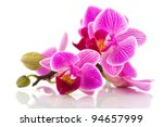Tropical Pink Orchid Isolated...