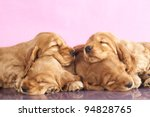 English Cocker spaniel  puppy sleeping - stock photo