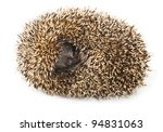 Little Needle Hedgehog Roll...
