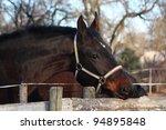 dark bay horse portrait   Shutterstock . vector #94895848