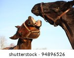 brown horse trying to bite... | Shutterstock . vector #94896526
