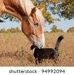 Tuxedo Cat And A Big Horse  ...