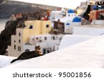 A Cat On A Roof In Santorini