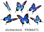 Stock photo papilio ulisses butterfly in many poses isolated on white background 95086471